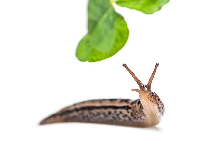 image of a slug